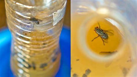 flies  invading  house     rid