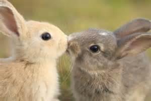 ウサギ:悪戯ウサギ (@hanafuri) | Twitter