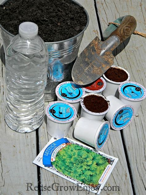 cup  diy plant starters