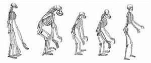 Humans are lightweights | Nature | The Earth Times