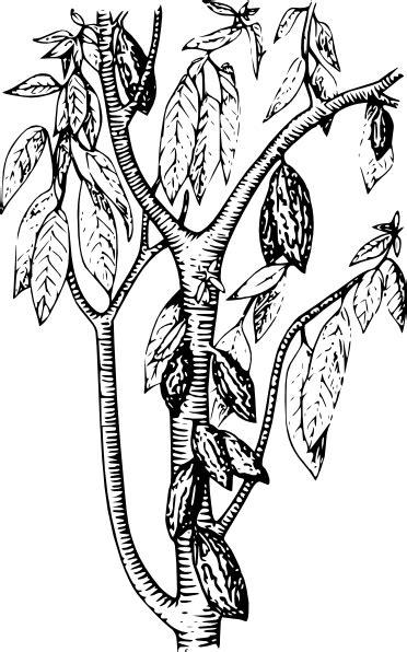 cacao clip art  clkercom vector clip art