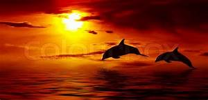 Schöne Delfin Bilder : sch ner delphin springt aus dem meer an stockfoto colourbox ~ Frokenaadalensverden.com Haus und Dekorationen