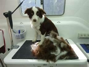 winter shedding dog images