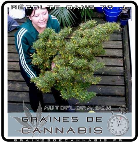 comment planter cannabis exterieur comment planter du cannabis en exterieur 28 images ou planter du cannabis en exterieur 28