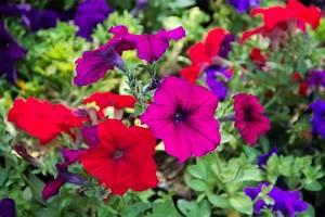 16 stunning perennial flowers that bloom all summer
