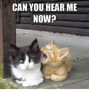 CAN YOU HEAR ME NOW? | Grumpy Cat Meme on me.me