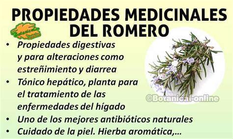 el organo y sus propiedades buena salud romero planta propiedades