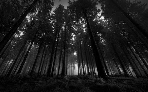 Dark Woods Wallpapers Group (73