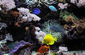 Underwater Aquarium Fish Coral High Resolution Images HD ...