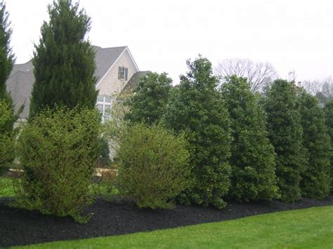 Best Yard Plants For Privacy
