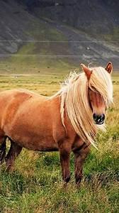 Pony, F, U00fcr, Android, Kostenlos, Herunterladen, Live, Wallpaper