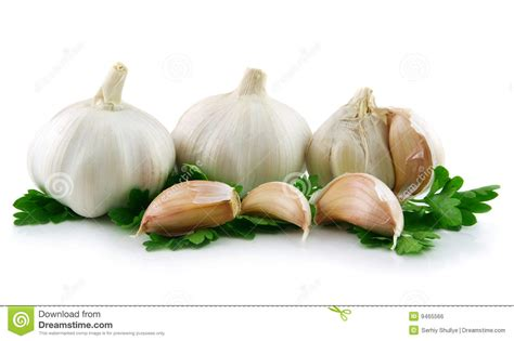 is garlic a vegetable garlic vegetable with parsley leaves isolated royalty free stock image image 9465566
