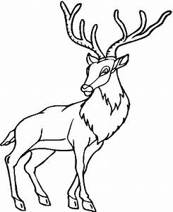 Free Coloring Pages - Forest Animals