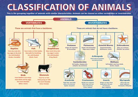 Science Fun Party: Investigate the Animal Kingdom
