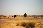 The Great Green Wall of Africa could fight desertification ...