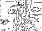 Kelp Forest Coloring Pages Friends Getcolorings sketch template