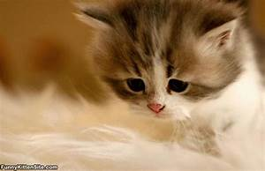Kitten With A Sad Face - funnykittensite.com