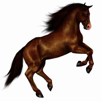 Horse Freepngimg Icon