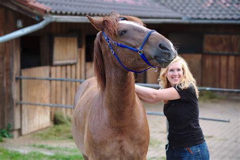die pferde pony campus