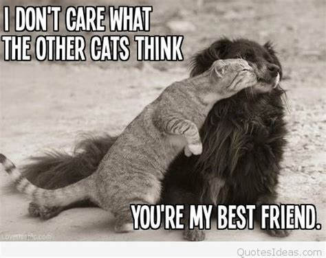friends image  animals  quote