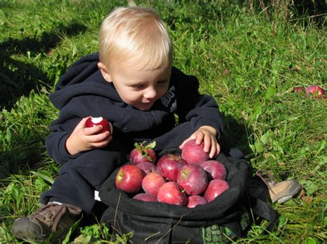 where to go for apple picking apple orchards outdoor fall activities in the chicago suburbs palatine il patch