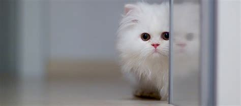 Super Cute Cat  Fast Online Image Editor
