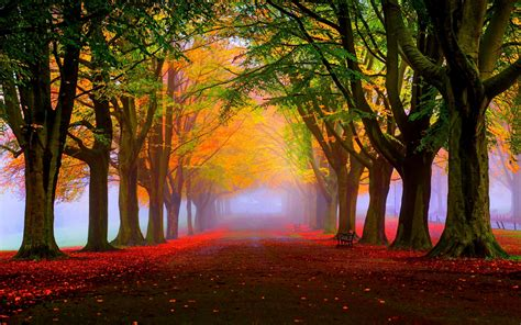wallpaper autumn fall tress fog foliage  nature