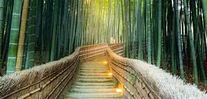 Bambus Vernichten Tipps : bambus als k belpflanze ideen tipps ~ Whattoseeinmadrid.com Haus und Dekorationen