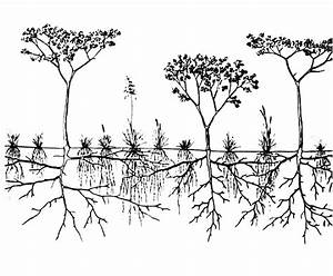 Representation of herbaceous (shallow, fibrous root system ...