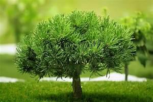 Kleiner Baum Garten : kleiner baum stockfoto colourbox ~ Lizthompson.info Haus und Dekorationen
