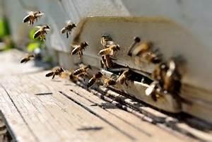 Mittel Gegen Bienen : mittel gegen bienensterben forschung entdeckt neues medikament gegen parasiten ~ Frokenaadalensverden.com Haus und Dekorationen