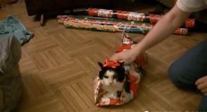 Comment Emballer Un Cadeau : comment emballer un chat pour no l vid os mdr ~ Maxctalentgroup.com Avis de Voitures