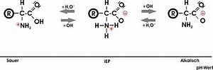 Isoelektrischen Punkt Berechnen : proteine und aminos uren ~ Themetempest.com Abrechnung