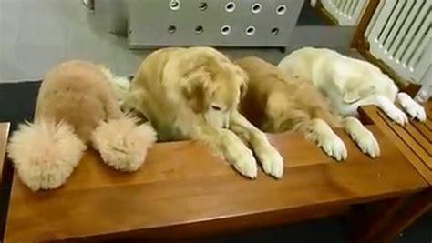 dogs pray  dinner video daily picks  flicks
