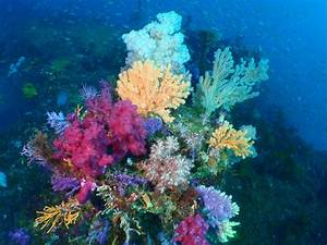Stunning underwater plants and sea life on the ocean floor ...