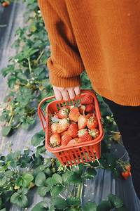 A Guide To Why Gardening Is Really  Really Good For You