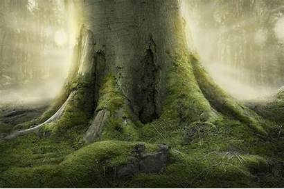 Tree Roots Universel Recensement Arbres Earth Signs