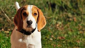 Best dog crate for beagle dog or puppy for Best dog crates for puppies