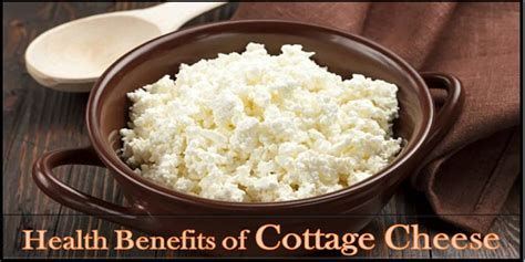 cottage cheese health surprising health benefits of cottage cheese khoobsurati