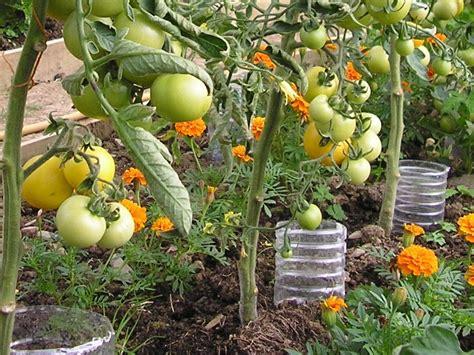 14 Tips For Watering Vegetables And Seedlingsgreenside Up
