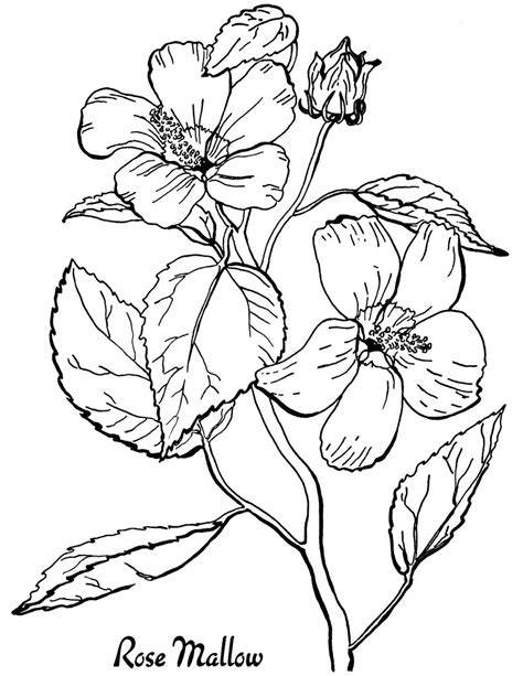 10 floral adult coloring pages the graphics fairy