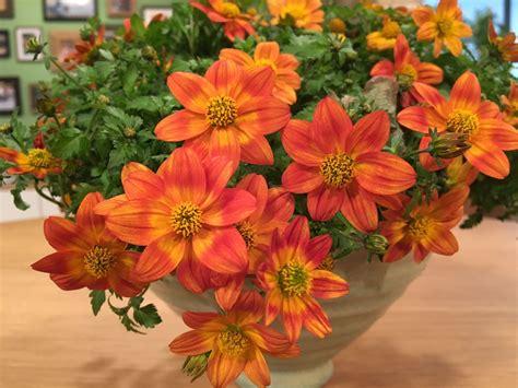 Blumen Für Den Balkon by Orange Blume Der Neue Trend F 252 R Den Balkon Und Die