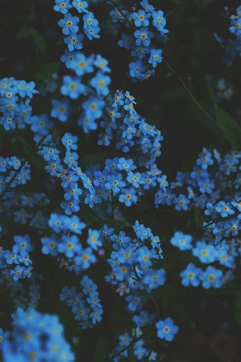 on blue flower wallpaper light blue