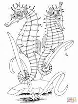 Seahorse Coloring Seahorses Pages Printable Crafts Sea Bluegill Supercoloring Adult Drawing Ocean Draw Fish Tablets Compatible Ipad Android Version Template sketch template