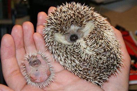 dulces imagenes de animales  sus crias  descargar