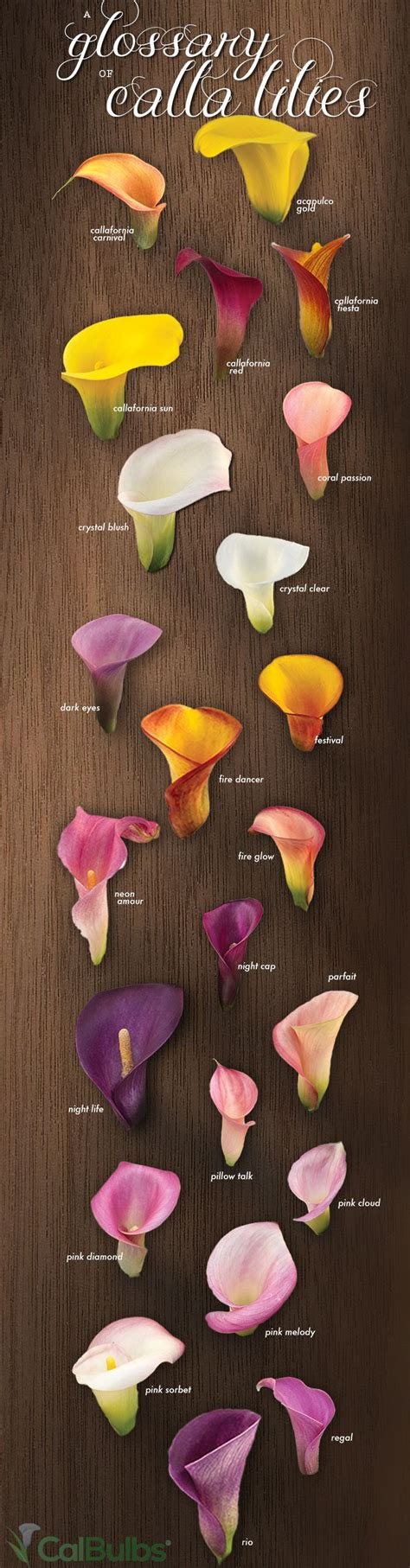 calla colors best 25 calla lilies ideas on calla lillies