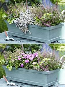 Balkonkästen Winterhart Bepflanzen : zwei varianten balkonkasten herbstlich bepflanzen ~ Lizthompson.info Haus und Dekorationen