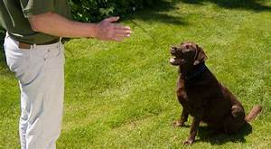 home dog training bark busters australia expert dog With dog training at home