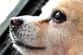 dogs whiskers grow  bark