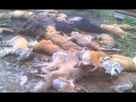 Ohio Exotic Wildlife Massacre! - YouTube